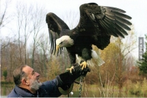 Visited my    years old grandfather s cottage didn t know he got a huge bald eagle